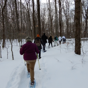 Winter Snowshoe Hikes at Allegany State Park