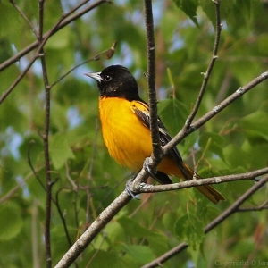 The Sounds of Spring with Pfeiffer Nature Center