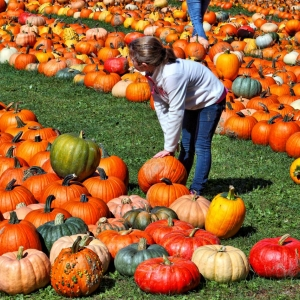 Pumpkinville Photo by Greg Spako
