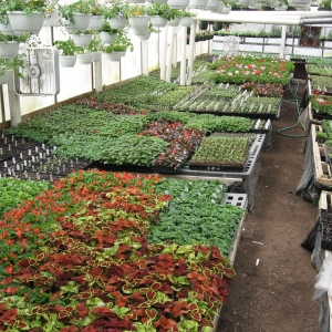 Photo of inside the greenhouse