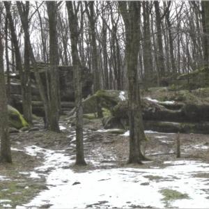 Photo of Thunder Rocks at Allegany State Park