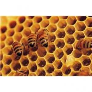 Photo of honeycomb