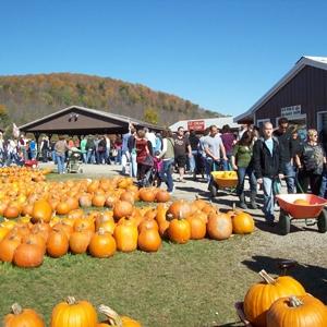 Pumpkinville in Cattaraugus County