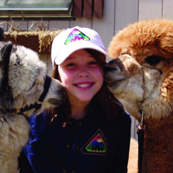 Alpacas kissing young lady