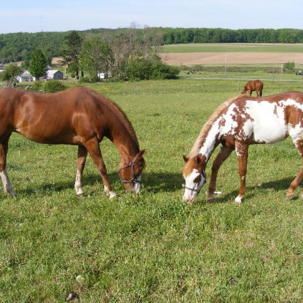 Horses at Enchanted Oaks Ranch