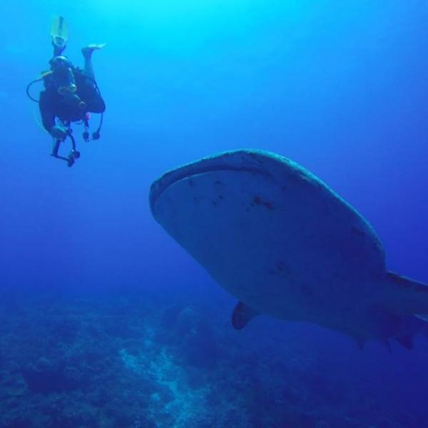 J&D Scuba Exotic Dive Trip Photo
