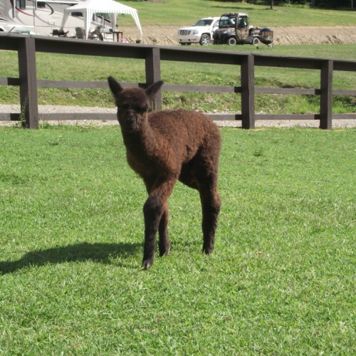 Baby Cria on the Farm