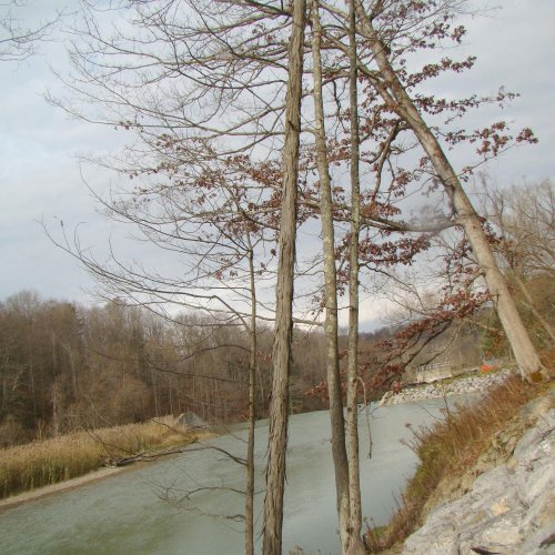 The bank along Cattaraugus Creek and Scoby Dam. Notice the leaning tree