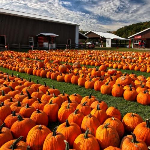 Pumpkinville in Cattarugus County