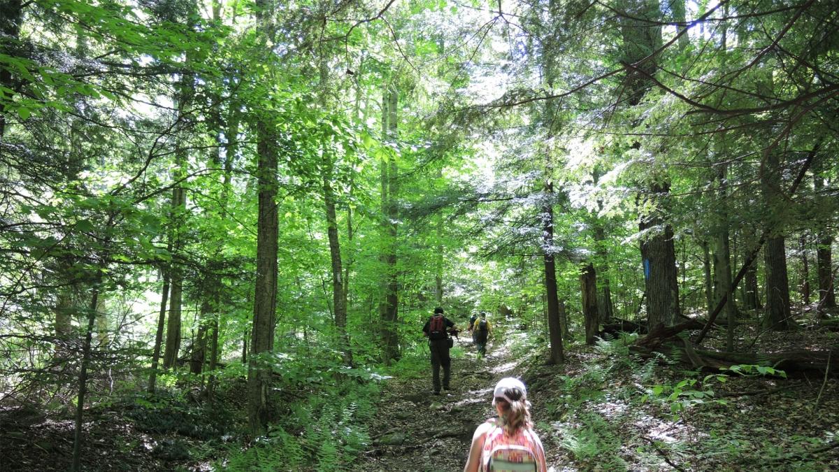 Go Hiking!