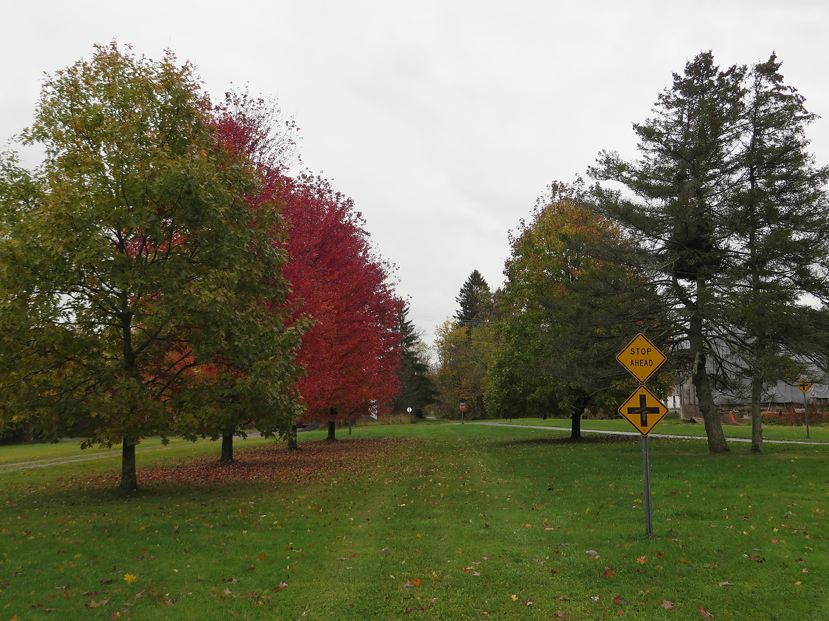 Cattaraugus County Fall Foliage