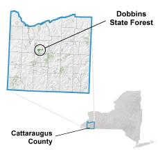 Where Dobbins Memorial Forest is located in Cattaraugus County