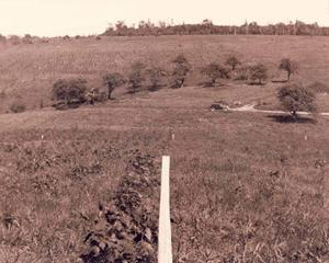 Dobbins Memorial State Forest was once a field