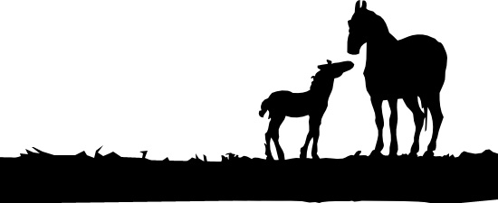 Silhouette of Mare and Foal in a field