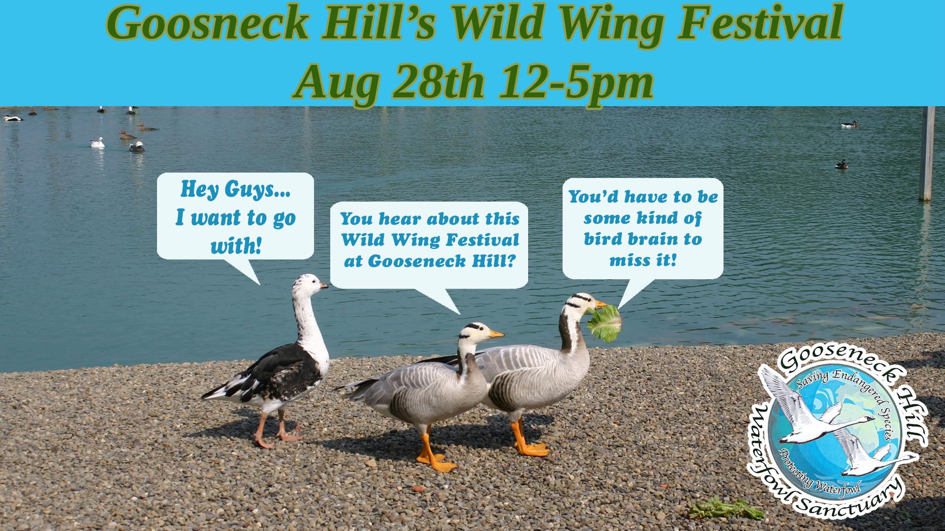 Wild Wing Festival at Gooseneck Hill