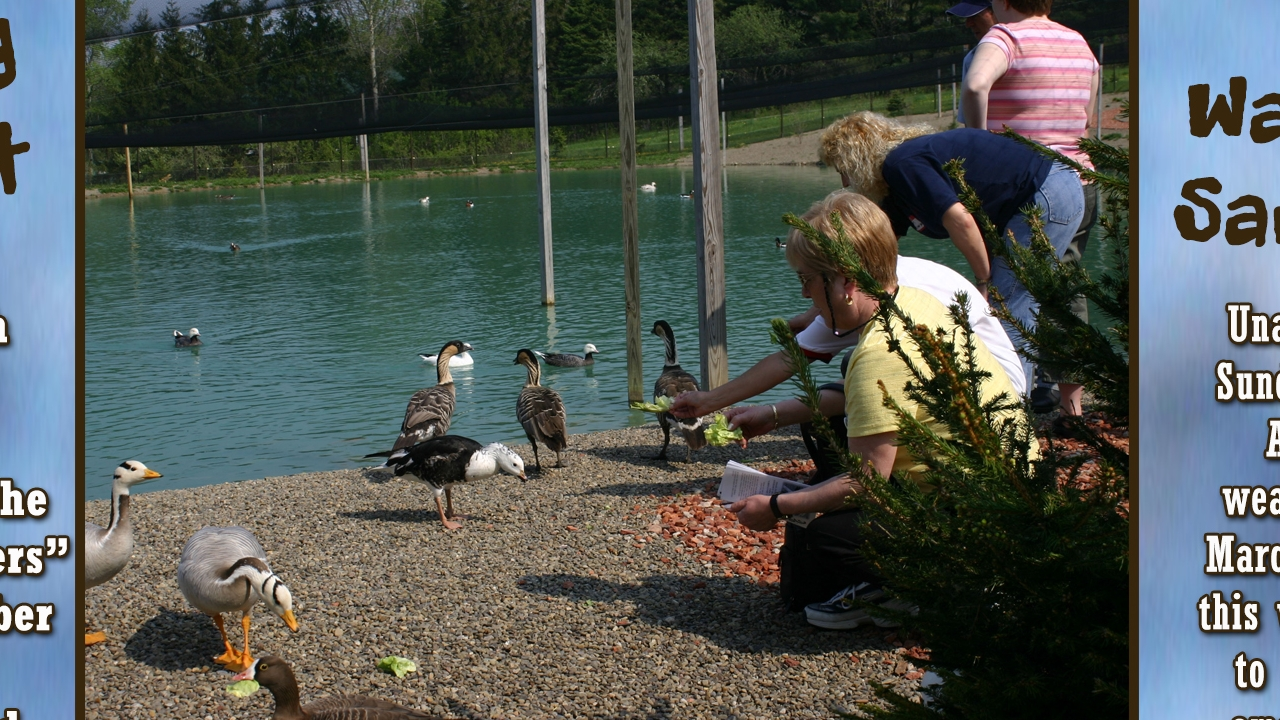 2018 Wild Wing Fest at Gooseneck Hill Waterfowl Sanctuary