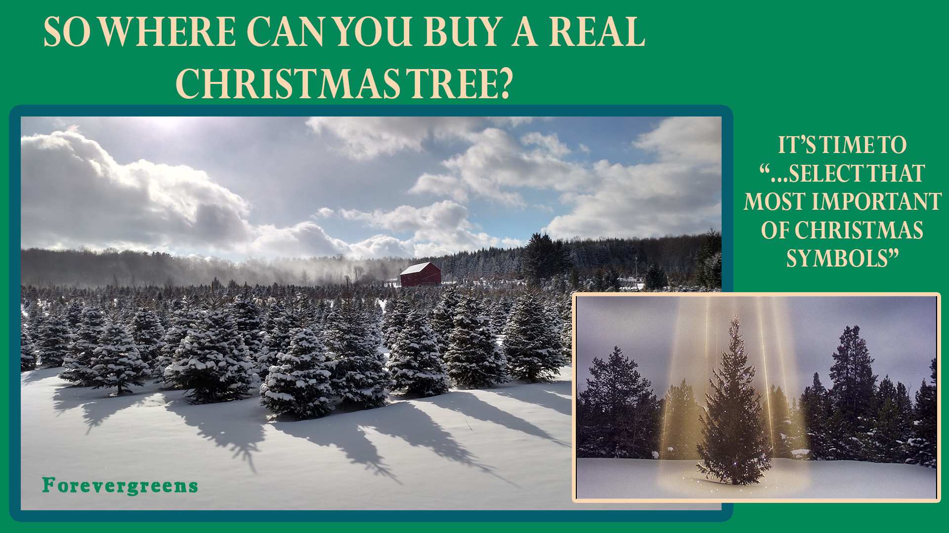 Where to buy a real Christmas Tree in Cattaraugus County