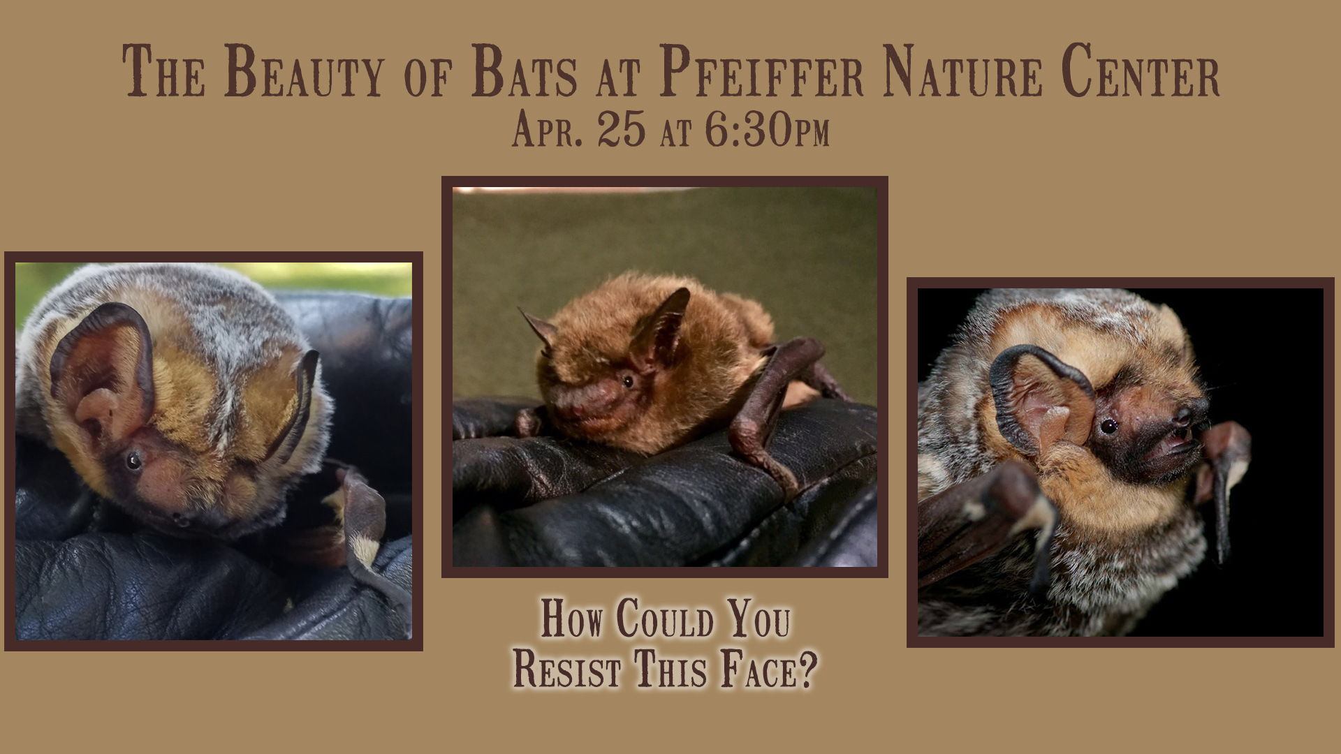 The Beauty of Bats with Pfeiffer Nature Center