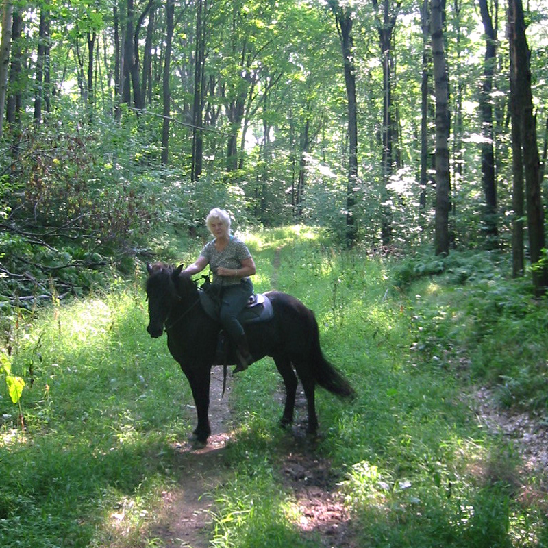 Alice New Star Horses http://enchantedmountains.com/trails/allegany-state-park-equestrian-trails